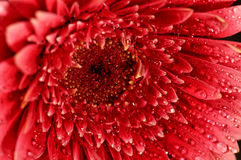 blommamakro Royaltyfria Foton