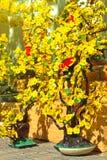 blommamarknad Arkivfoton