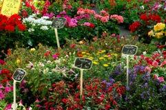 blommamarknad Fotografering för Bildbyråer