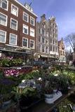 Blommamarknad i Amsterdam jordaan växter Arkivfoton