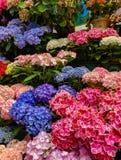Blommamarknaden i Paris lokaliserade på Ilen de la Citera, mellan det Notre-Dame domkyrka- och Sainte-Chapelle kapellet royaltyfri fotografi