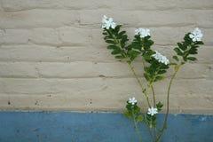 Blommamaterielbild Arkivfoto