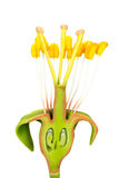 Blommamodell med stamens och pistillar Royaltyfri Fotografi