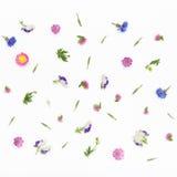 Blommamodell på vit bakgrund Bästa sikt, lekmanna- lägenhet Royaltyfri Foto
