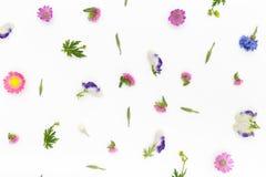 Blommamodell på vit bakgrund Bästa sikt, lekmanna- lägenhet Royaltyfri Fotografi