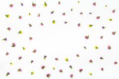 Blommamodell på vit bakgrund Bästa sikt, lekmanna- lägenhet Arkivfoto