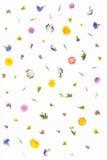 Blommamodell på vit bakgrund Bästa sikt, lekmanna- lägenhet Royaltyfria Bilder