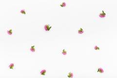 Blommamodell på vit bakgrund Bästa sikt, lekmanna- lägenhet Royaltyfria Foton