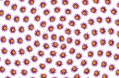 blommamodellro sex variants Royaltyfria Bilder