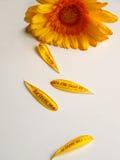 blomman älskar mig petals Arkivbild