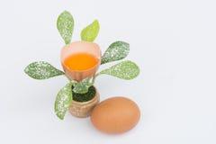 Blomman av ägget Arkivbild