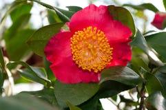 Blomman av den dekorativa busken Fotografering för Bildbyråer
