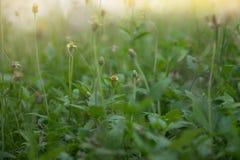 Blomman av gräset Arkivbild