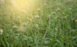 Blomman av gräset Arkivbilder