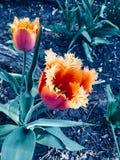 Blomman av liv royaltyfria bilder