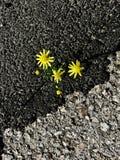 Blomman av liv arkivfoton