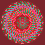 Blomman av liv kärnar ur fjädrar upplagan mandala-för design och medita Royaltyfri Foto