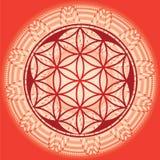 Blomman av liv kärnar ur mandala-fjädrar upplaga-bruk för design och mig Royaltyfri Fotografi