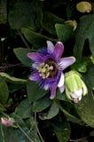 blomman av ovanligt Royaltyfri Bild