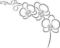 blomman blommar orchidorchidsphalaenopsis royaltyfri illustrationer