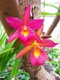 blomman blommar orchidorchidsphalaenopsis Arkivfoton