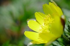 Blomman blomstrar att blomma på våren Arkivbilder