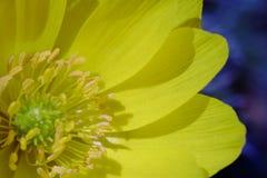 Blomman blomstrar att blomma på våren Royaltyfria Foton