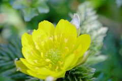 Blomman blomstrar att blomma på våren Arkivbild