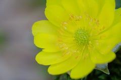 Blomman blomstrar att blomma på våren Arkivfoton