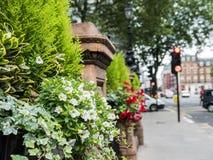 Blomman boxas utanför hotellet Russell, Russell Square, London Arkivfoton