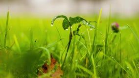 Blomman efter regnar lager videofilmer