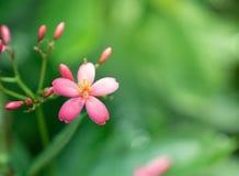 Blomman för lösa rosa färger på suddig gräsplan lämnar bakgrund fotografering för bildbyråer