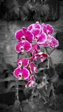 [Blomman för original- skytte] royaltyfri fotografi