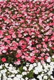 Blomman fjädrar in Arkivfoto