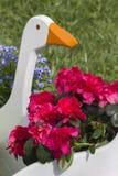 Blomman fjädrar in Arkivfoton