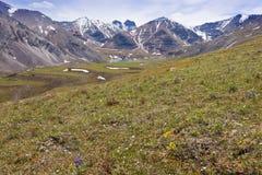 Blomman fjädrar den alpina dalen F. KR. Kanada för sjön Royaltyfria Bilder