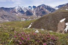 Blomman fjädrar nordliga steniga berg F. KR. Kanada för sjön Arkivfoto