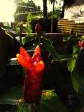 Blomman g?r dig tycker om livet i v?rlden arkivfoton