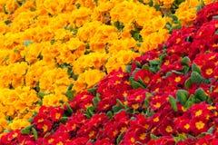 Blomman gränsar Arkivfoton