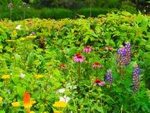 Blomman gränsar Royaltyfria Bilder