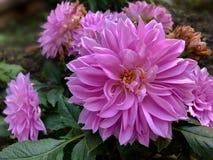 Blomman har dess tid för blom och vissnar arkivbilder