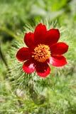 Blomman i ängen Arkivfoto