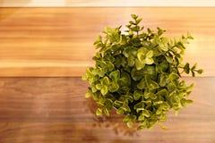 Blomman i blomkruka är på den wood tabellen arkivbilder