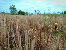Blomman i fält arkivfoto