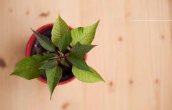 Blomman i röd blomkruka på träbakgrund Arkivfoton