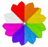 Blomman i regnbåge färgar med ett svartvitt segment Royaltyfri Bild