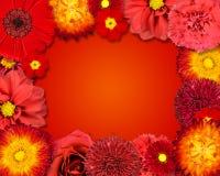 Blomman inramar med röda blommor på orange bakgrund Royaltyfri Foto