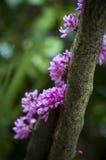 Blomman klamra sig fast intill trädet Fotografering för Bildbyråer