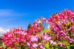 Blomman med många färgar Arkivfoton