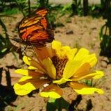 Blomman och buterfly arkivbild